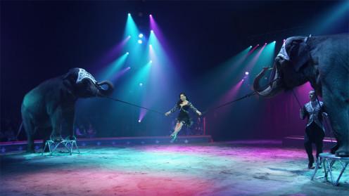 Videostill Circus Knie